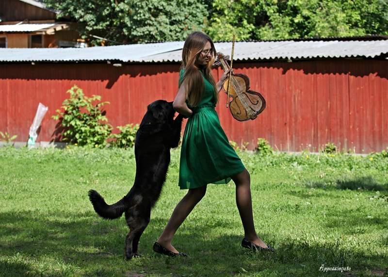 танцы с собаками картинки бокалах бьется пена