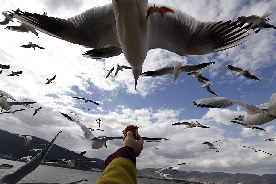 Чайки, мигрировавшие изСибири, надозером Дяньчи вкитайском городе Куньмин, провинция Юньнань. © Jason Lee/Reuters