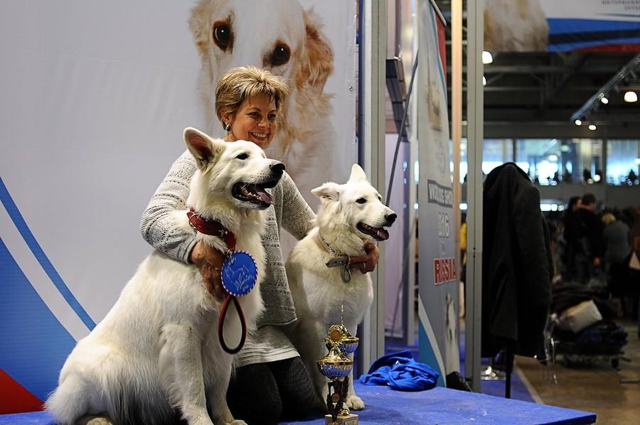 выставка собак в 2013 году: