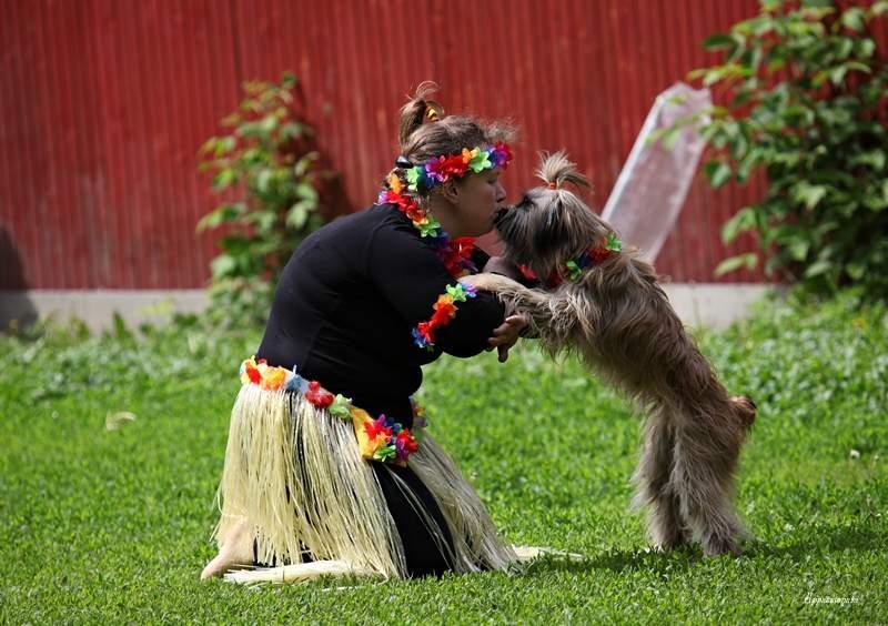 следует танцы с собаками картинки себе дева является