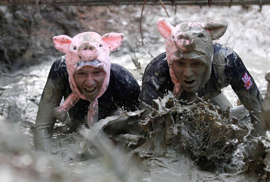 время они смешные картинки свинья в грязи рабочую зону
