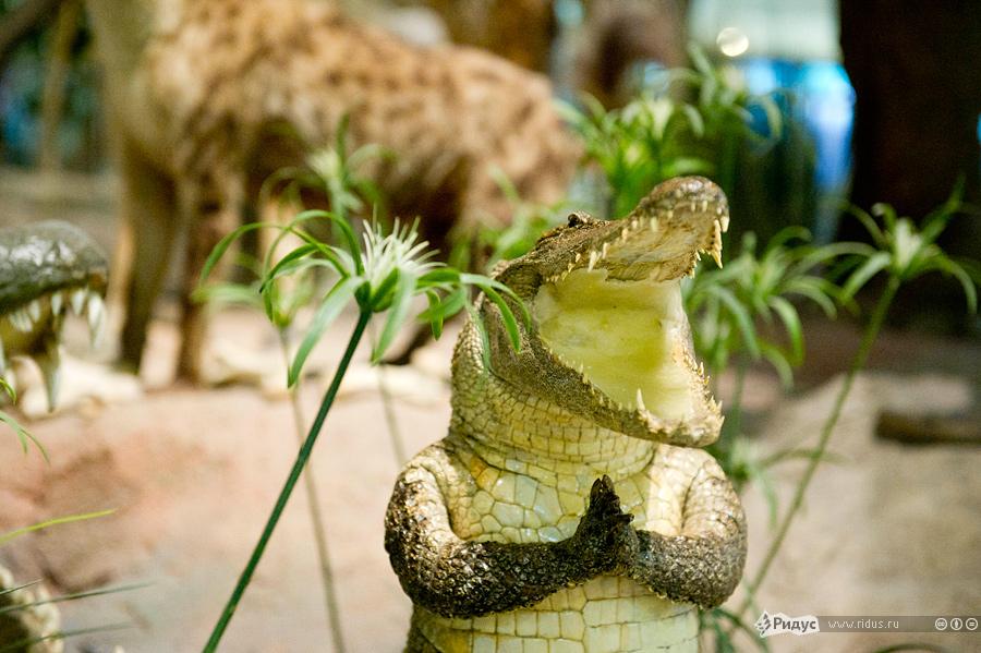 Открытка, картинки с крокодилами приколы
