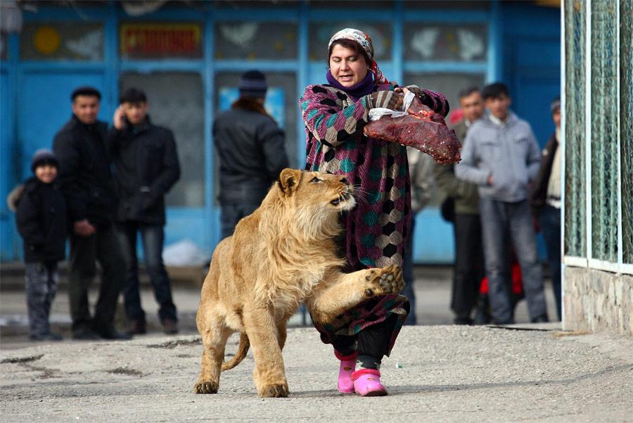 Сотрудница зоопарка вДушанбе с18-месячным львом Вадиком. © Nozim Kalandarov/Reuters