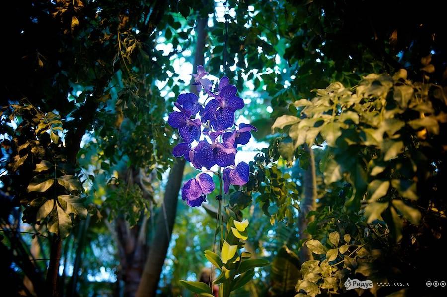 IIIЗимний фестиваль орхидей. © Антон Белицкий/Ridus.ru