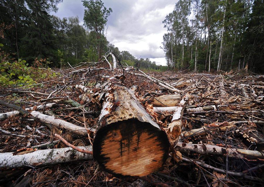 вырубают деревья картинки сегодня время
