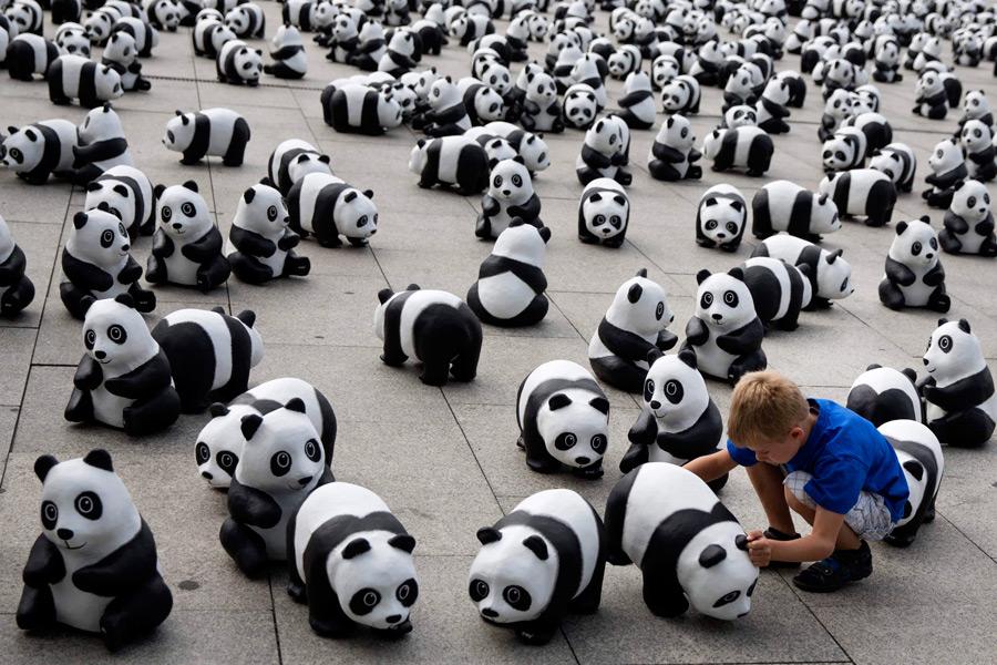 попросила много панд на картинке если парень