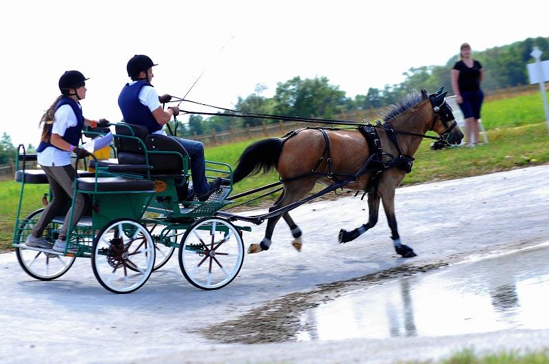 Дрессаж- фигурная езда по размеченной арене, где оценивается правильность походки лошади и точность движений, а.