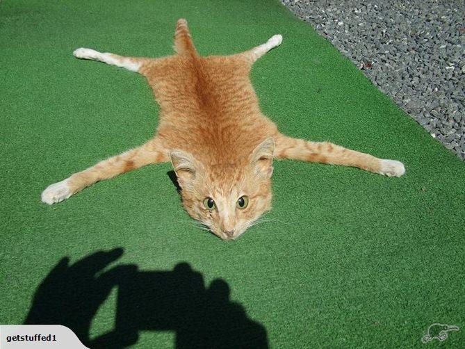 Как сделать из кота кошку