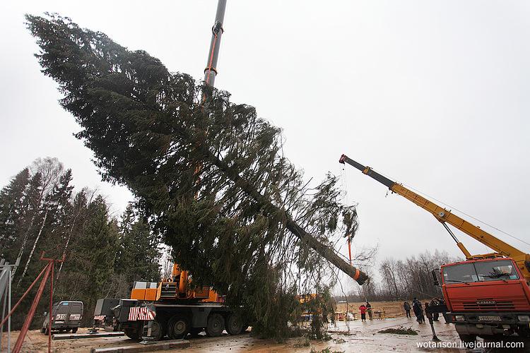 Церемония сруба самой главной новогодней елки страны вподмосковном Волоколамске. © wotanson.livejournal.com