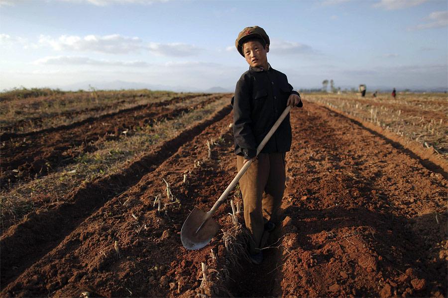 Северокорейский мальчик работает вполе одного изколхозов провинции Хванхэ-Намдо, наиболее сильно пострадавшей отнедавних тайфунов. © Damir Sagolj/Reuters