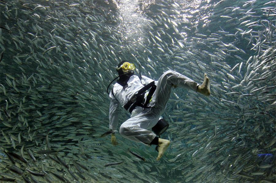 Дайвер, окруженный сардинами, показывает приемы тхэквондо дляпосетителей комплекса Coex Aquarium вСеуле. © JoYong-Hak/Reuters