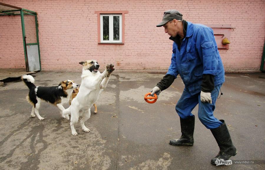 Приют дляживотных вКусково. Фоторепортаж © Антон Тушин/Ridus.ru