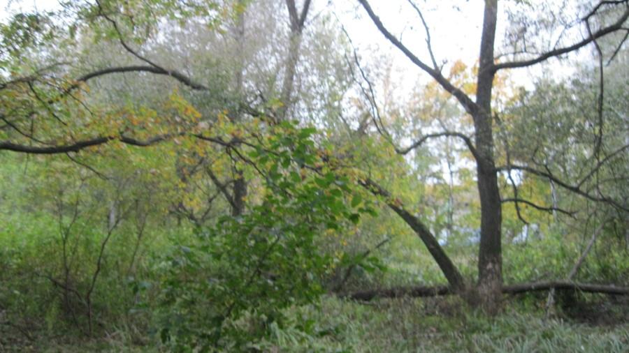 Давно упавшие около пруда деревья