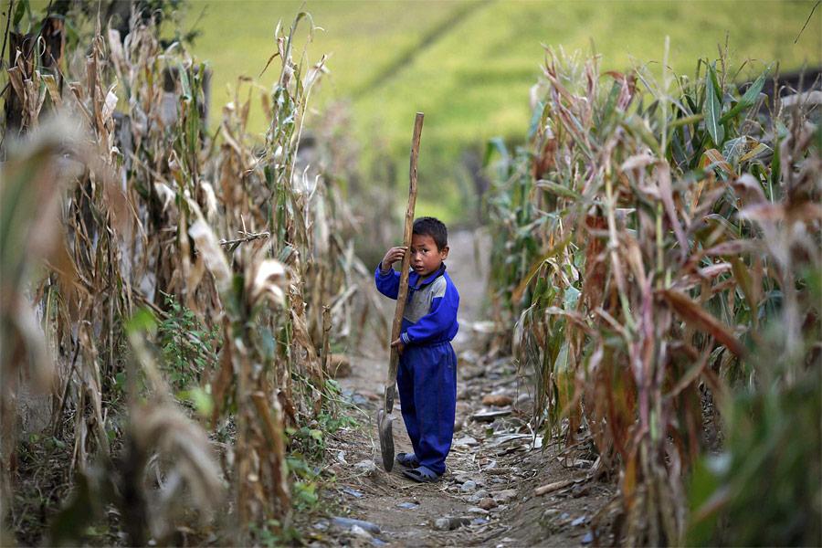 Мальчик вкукурузном поле колхоза Сокса-Ри, пострадавшем отнаводнения. © Damir Sagolj/Reuters
