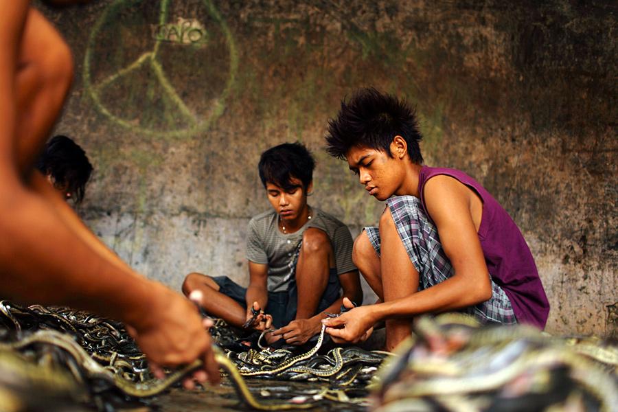 Рабочие разрезают ножницами змеиную кожу на бойне в деревне Капетакан недалеко от города Чиребон, Западная Ява...