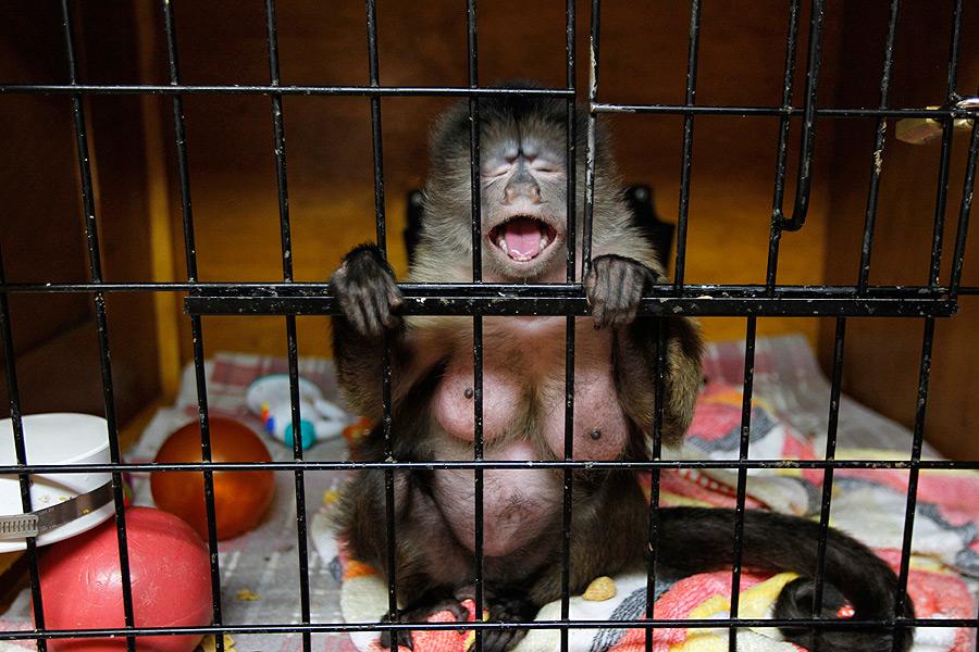 Смешные картинки обезьянник