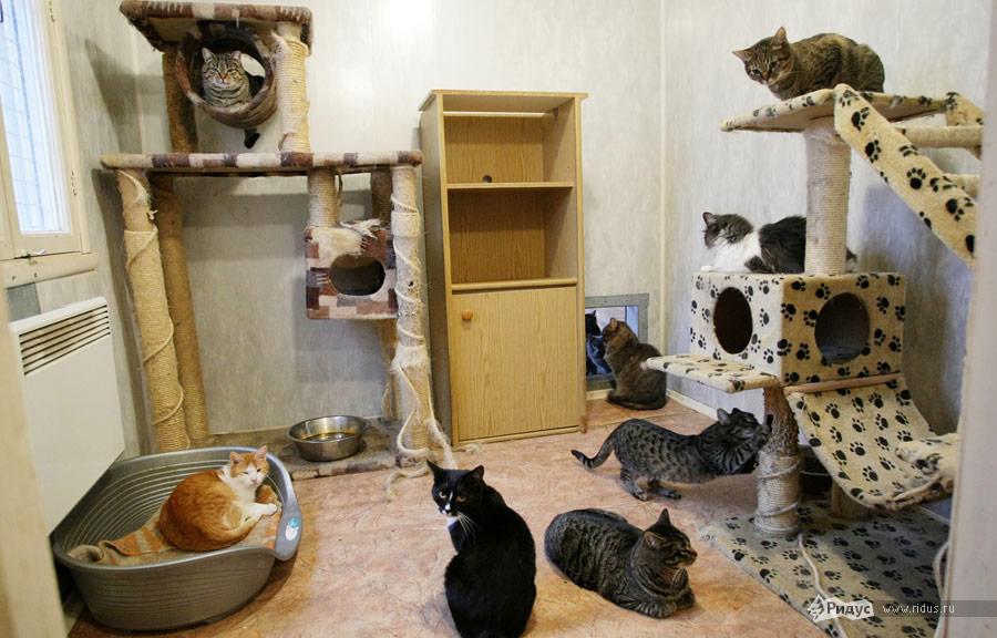 Что нужно для кошки картинки