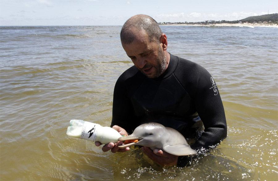 Глава общественной организации «S.O.SRescate Fauna Marina» Ричард Тесоре кормит новорожденного ла-платского дельфина, найденного наберегу неподалеку отМонтевидео. © Andres Stapff/Reuters