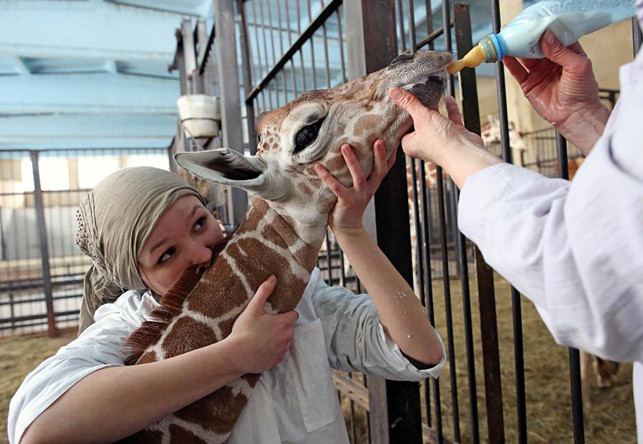 картинки человек кормит животных мимо того