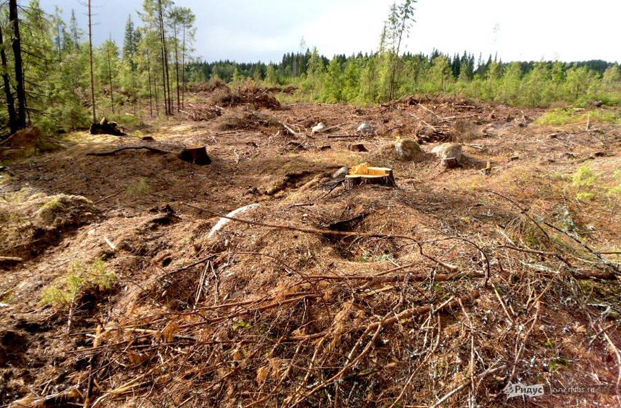Курганы после сноса леса.