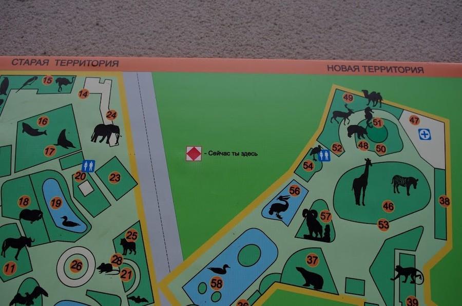 Московский зоопарк, или как