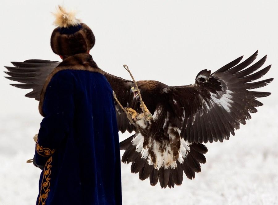 Ручной беркут возвращается кохотнику. © Shamil Zhumatov/REUTERS