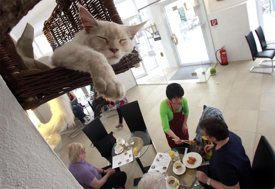 еда из кошек фото