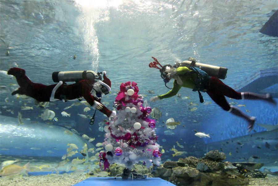 Водолазы украшают рождественскую елку вManila Ocean Park наФилиппинах. © Romeo Ranoco/Reuters