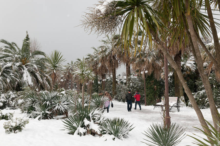 Снег вСочи. 2февраля 2012 года © Евгений Реутов