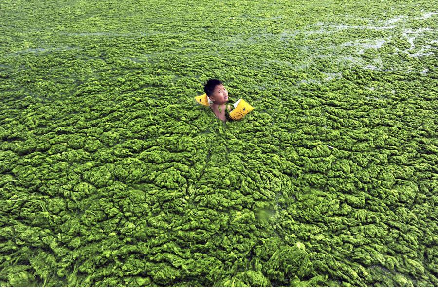 Китайский мальчик плывет позаросшему водорослями Желтому морю вЦиндао. © China Daily/Reuters