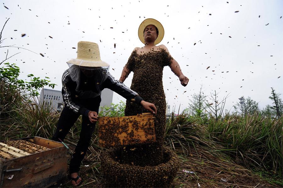 Прикольные картинки про пчеловодов