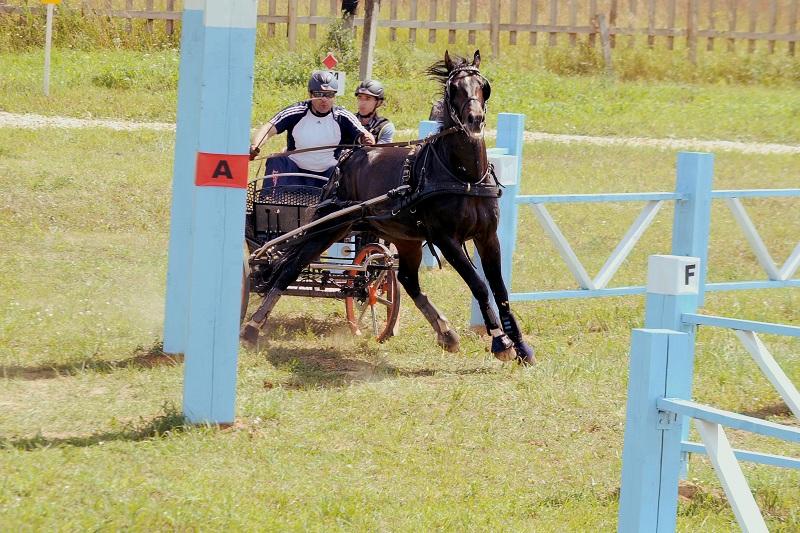 Дрессаж - фигурная езда по размеченной арене, где оценивается правильность походки лошади и точность движений, а.