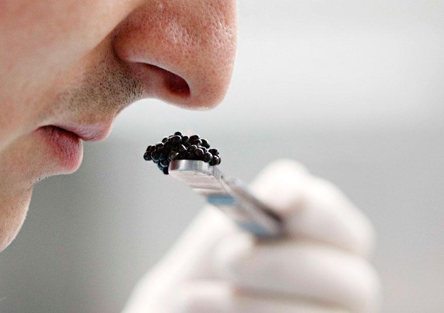 Специалист определяет качество икры назапах влаборатории вшвейцарской лаборатории вБернских Альпах. © Michael Buholzer/Reuters
