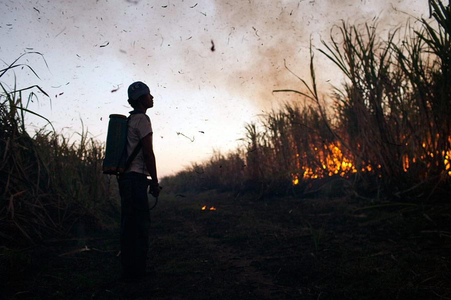 Рабочий наблюдает законтролируемым сжиганием плантации сахарного тростника вГватемале. © Rodrigo Abd/AP Photo