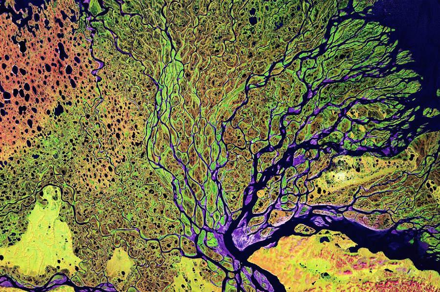 Дельта реки Лены в России.